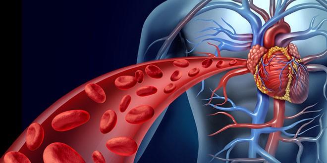 Effect van Elektronisch roken op Hartcellen